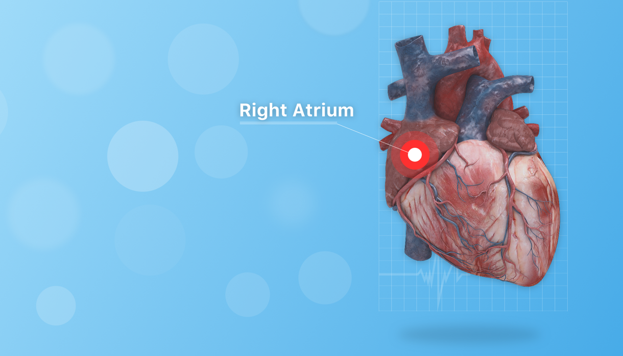 Heart 3D model augmented reality app